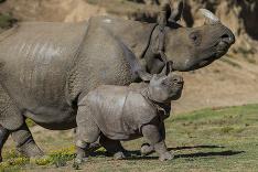 Mláďa nosorožca
