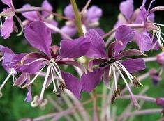 Kvety v Slovenskom raji