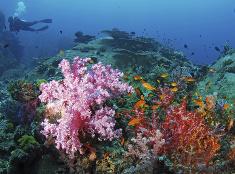 Spoznajte morské hlbiny