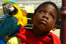 Chlapec s papagájom