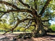 strom, park