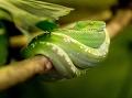 had na konáriku