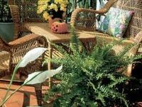 Zimná záhrada – domáca