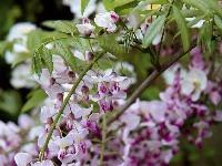 Na jar zatraktívnia záhradu