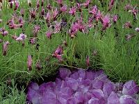 Sklo Sklo sa vnašich záhradách