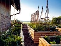 Pestovanie zeleniny vo vyvýšených