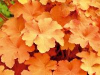 Oranžové listy Čistá zelená už