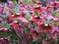 Atraktívny aj vzime  Kvetinový