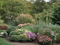 Chryzantémová jeseň  V žiadnom