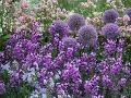 Kvetinový záhon atraktívny po