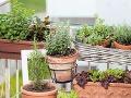 Balkónové záhradkárčenie prináša svoje