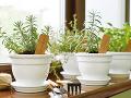 Ako si vypestovať bylinky