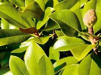 Exotické rastliny – trend