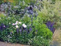 Mliečniky, ruže, šalvie, turice,bedrovníky