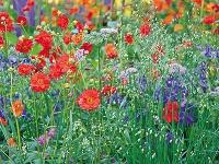 Pri koncepcii kvetinových záhonov