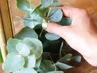 Rastliny skráťte záhradníckymi kliešťami
