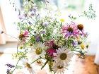 Bylinky zo záhradky, kvety