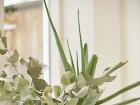 Živé kvety a rastliny
