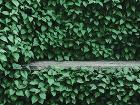 Voľne rastúce živé ploty
