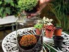 VÝSADBA Rastliny vysadíme s
