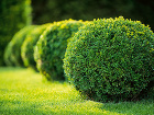 V modernej záhrade vyniknú