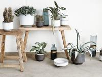Kaktusy asukulenty sú výbornou