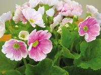 Kvitnúce rastliny oživia každý