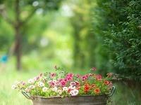 Súčasťou záhrad sú i
