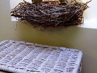 Autorom symbolického hniezda je