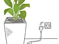 Naordinujte si 6 rastlín
