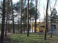 V borovicovom lese na