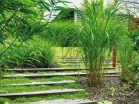 Okrasné trávy výborne zapadajú