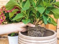 Rastlinu opatrne vložte do