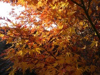 Dreviny, ktoré vašu záhradu na jeseň zaplavia farbami