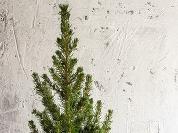 Vianočná výzdoba: Nechajte vyniknúť