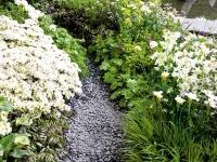 Cvijeće oko kuće  - Page 4 Zahrada-kvety-chodnik-md0906_152