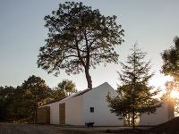 Veľkú borovicu na pozemku nevyrúbali, ale dom postavili okolo nej