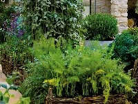 md0809_114, záhrada, Záhony tisícich chutí a vôní