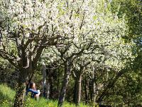 """Ovocný sad. """"Údržba stromov"""