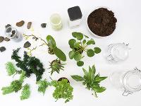 Budeme potrebovať nádoby, rastlinky