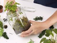 Rastlinky by nemali byť