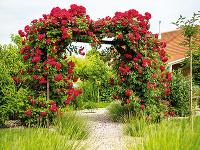 Rôzne druhy ruží sú