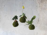 Levitujúce interiérové rastliny? Inšpirujte sa týmito krásnymi závesnými dekoráciami