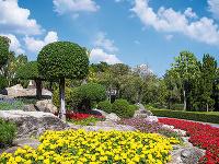 Aké druhy okrasných listnatých stromov si vybrať do záhrady a podľa čoho?