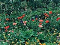 Záhrada márnotratne hýri farbami.
