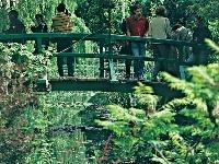 Drevený mostík a leknové