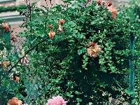 Záhrada sa podobá dielu
