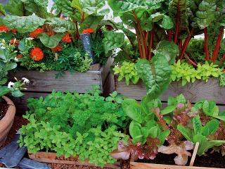 Zeleninu môžete kombinovať sbylinkami