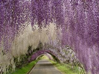 Najromantickejšia rastlina, ktorej kvety