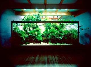 Japonec vyrába fascinujúce prírodné